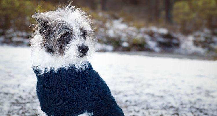 Los perros más propensos a sufrir hipotermia son los más pequeños