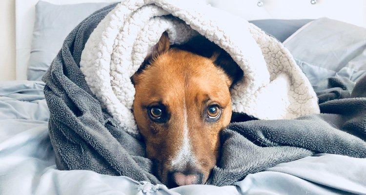 Es imprescindible que si nuestra mascota tiene hipotermia actuemos de forma rápida