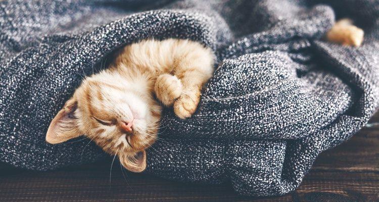 No es necesario que el gato haya pasado frío para que lo experimente