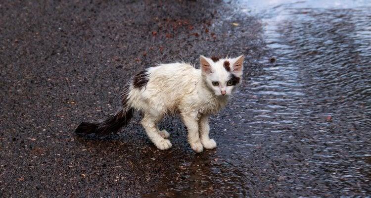 Si esta muy mojado no puedes frotarle con brusquedad, debes secarle suavemente