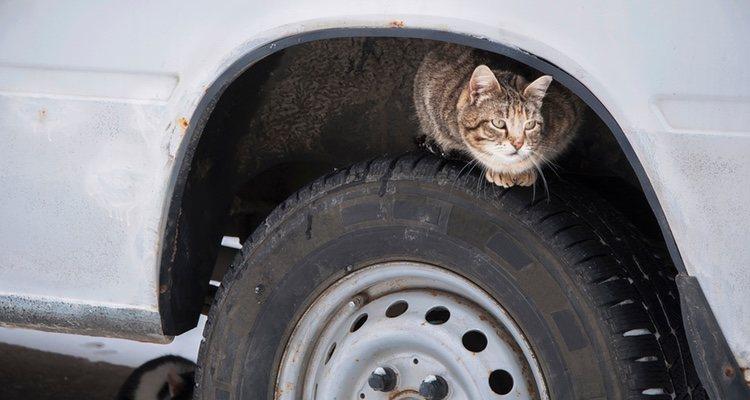Los gatos callejeros en invierno se resguardan en las rudas de los coches. Debes tener precaución