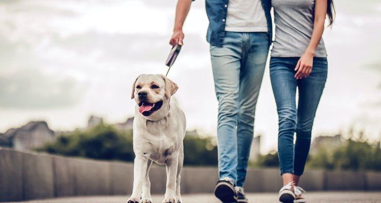 Los paseos y los cuidados hacen que la pareja tenga una responsabilidad conjunta
