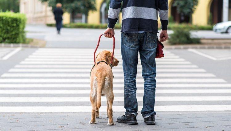 El entrenamiento de un perro de asistencia comienza desde que a penas nace