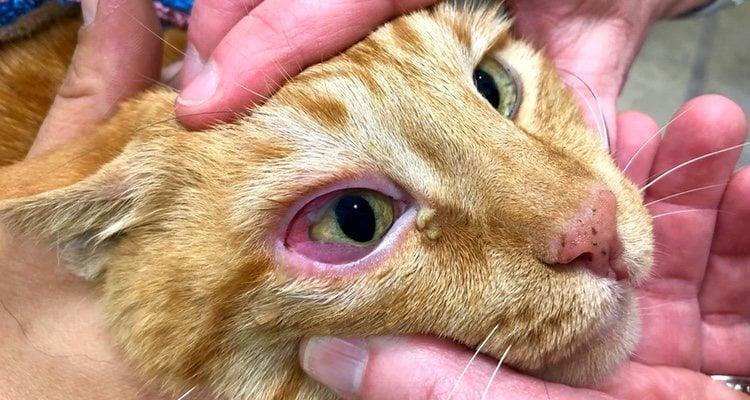 Los ojos rojos e irritados pueden ser causa de alergia