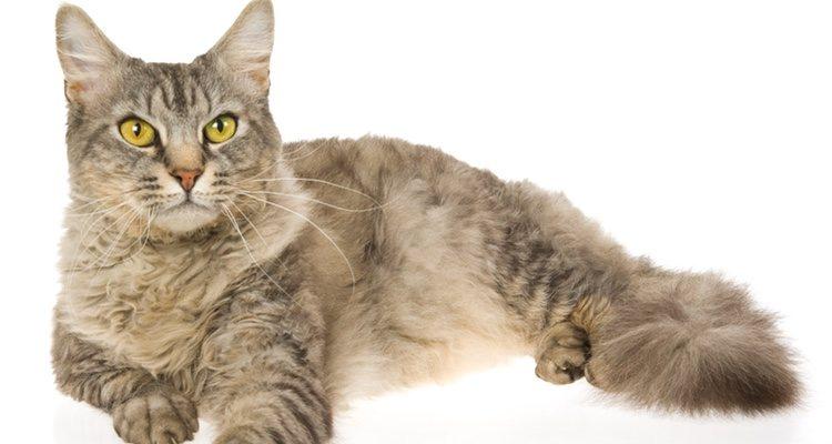 Es importante el tamaño del gato a la hora de darle de comer