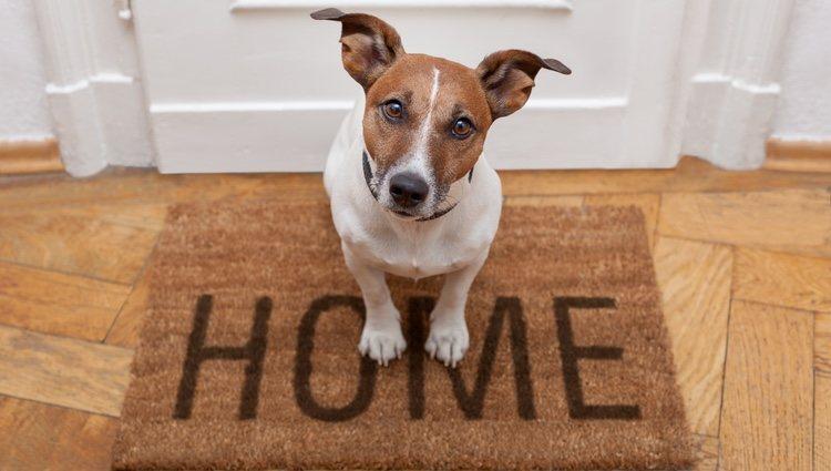 Las casas de acogida juegan un papel muy importante en la vida de un perro