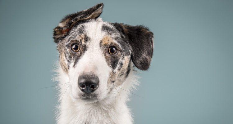 Son perros que vivirán más años que un perro de raza