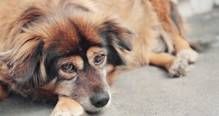 Son perros que siempre se han visto aislados