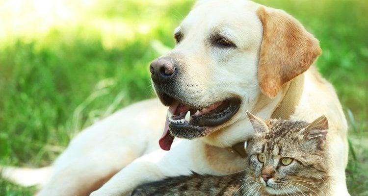 Es fundamental saber los cuidados necesarios de los perros y gatos senior