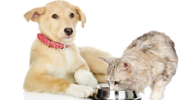 La alimentación de los perros senior y la de los gatos senior es fundamental