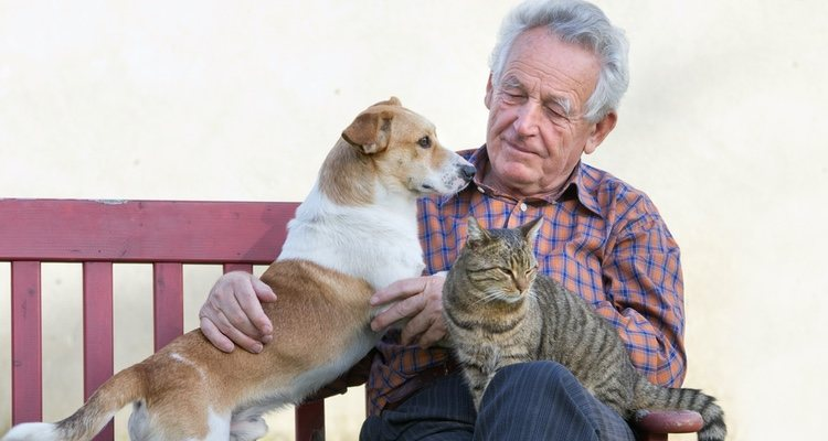 Hay que tener muy claros cuáles son los cuidados específicos para los perros y gatos senior