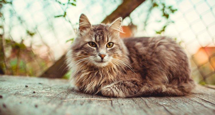 Los gatos adultos no cambiarán físicamente