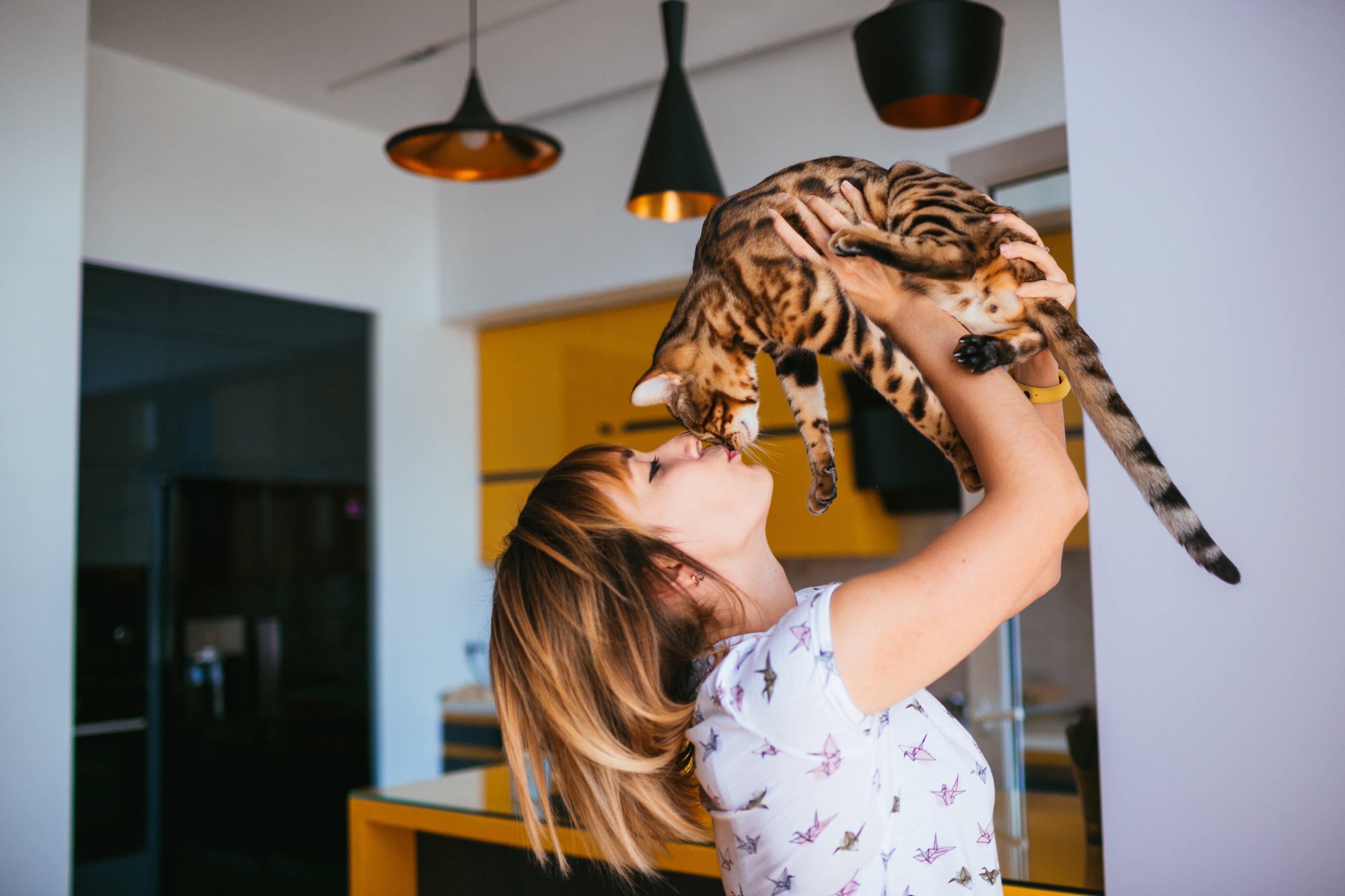 Когда вы усыновляете взрослого кота, вы оказываете ему большую услугу