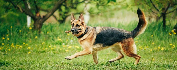 Los perros adultos necesitan una familia que les adopte y les cuide