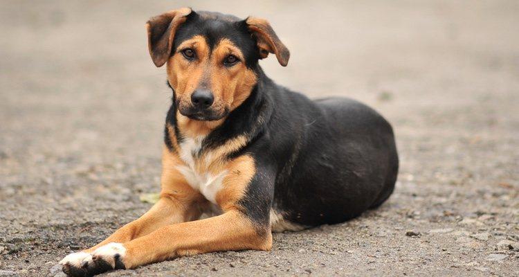 Los perros adultos están más domesticados debido a su edad