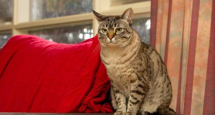 Debes ir a un especialista para saber como es la mejor forma de alimentara tu gato