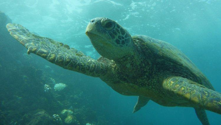 No toda las tortugas hibernan, depende de la especie