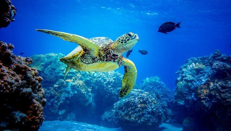 Las tortugas tienen varios pasos a seguir en la hibernación