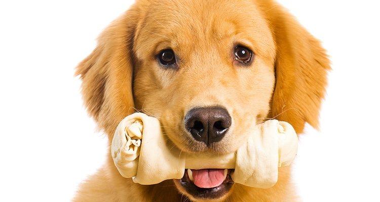 Hay huesos que es conveniente no dárselos a los perros por su salud