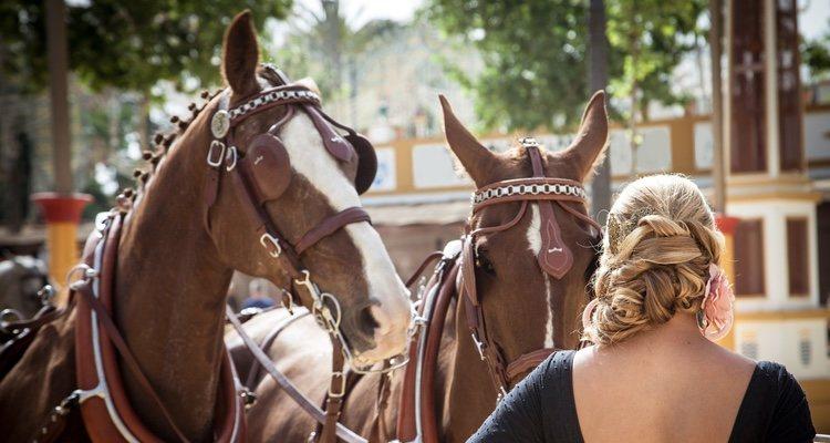 Hace 50 siglos el caballo andaluz ya era montado por los humanos