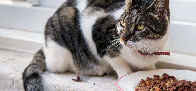 Хорошая диета поддерживает здоровье кошки