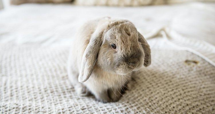 Los conejos pueden sufrir accidentes debido a su constante nerviosismo