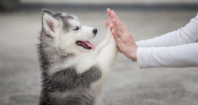 Jugar con tu perro creará un vínculo especial entre los dos