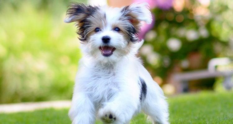 Es importante que los cachorros tengan actividad física a diario