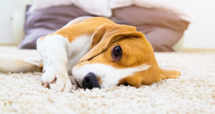 Acudir frecuentemente a las visitas con el veterinario ayudarán a diagnosticarlo