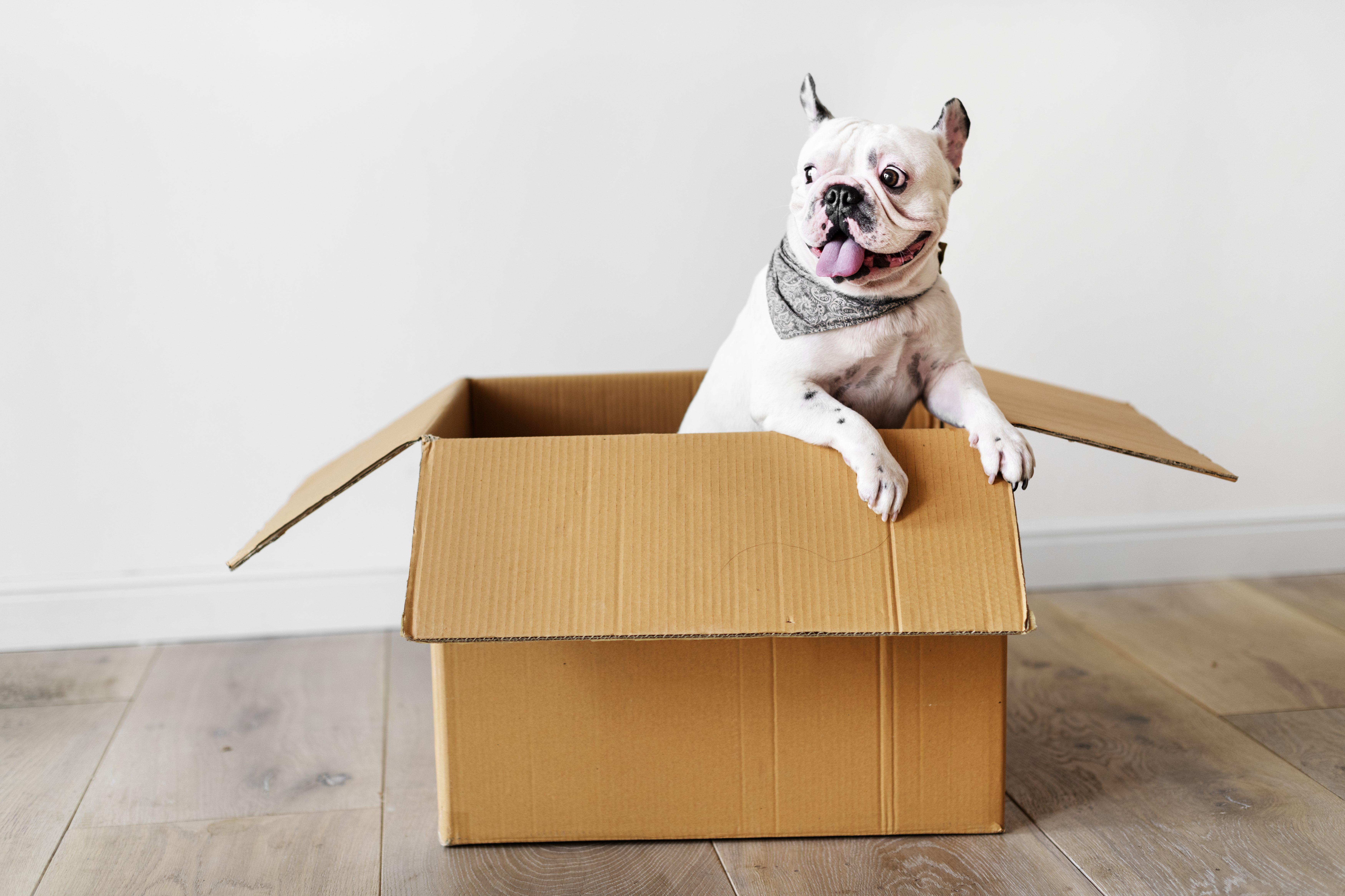Собаки любят картонные коробки