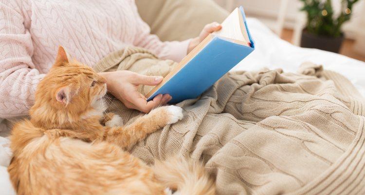 Los gatos son animales independientes pero que dan mucho cariño