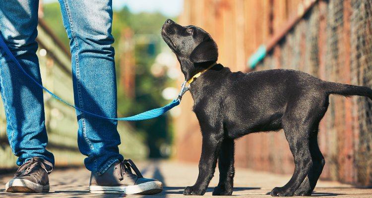 Sacar al perro a pasear es una de las mejores opciones