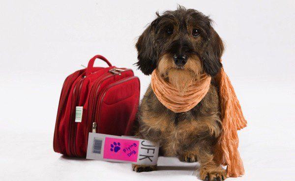 Transportar a tu mascota, una opción cada vez más viable y sencilla