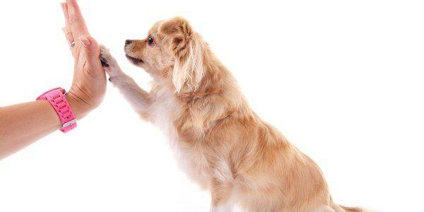 Anima a tu perro cuando haga las cosas bien