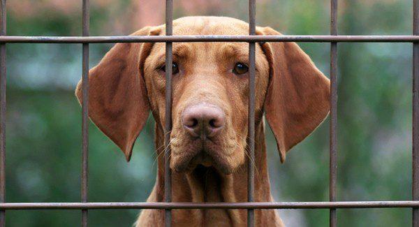 Hay que buscar el perro que mejor se adapte a nuestro ritmo de vida
