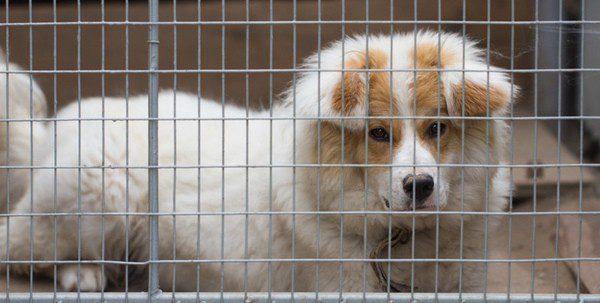 Un refugio o una perrera es un buen lugar para buscar a tu nueva mascota