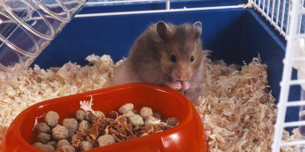 La jaula del hámster tiene que ser cómoda y saludable para el roedor