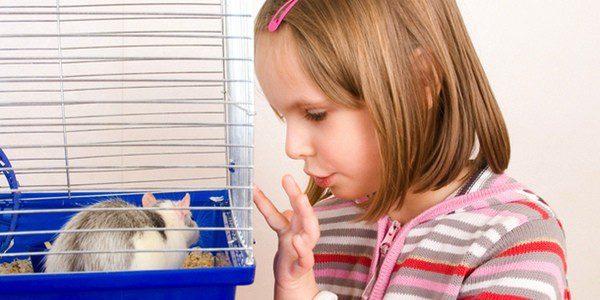 Los niños pequeños no deben acercarse al hámster sin supervisión de un adulto