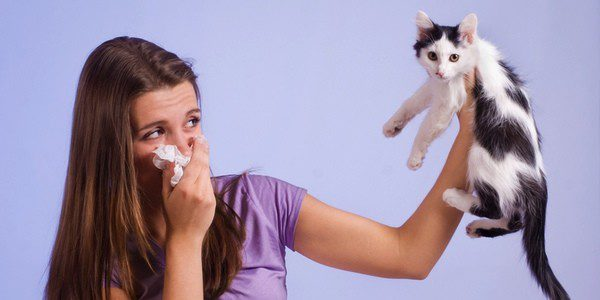 La alergia a los gatos se produce por las partículas que transportan