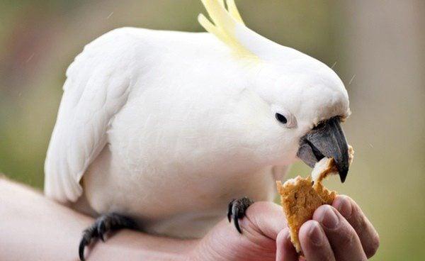 La correcta alimentación de los pájaros es fundamental para su desarrollo