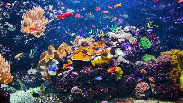 C mo limpiar un acuario bekia mascotas for Peceras con peces