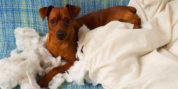 Pulgas, garrapatas y ácaros son los parásitos más habituales en los perros