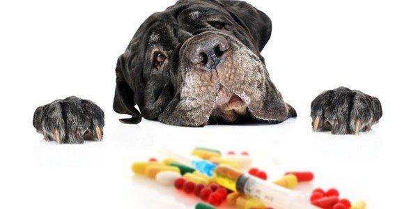 Para tratar la enfermedas es necesario compaginar un tratamiento médico con cambios en el entorno del perro