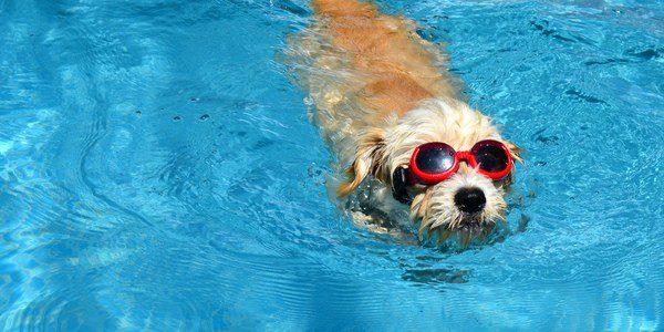 La natación ayuda a prevenir la aparición de problemas cognitivos