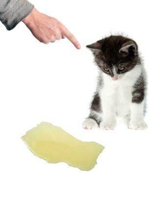 El estrés interno afecta al comportamiento del gato