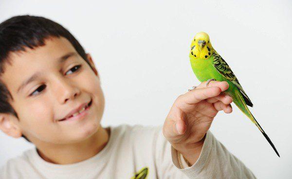 Debemos estar pendientes de nuestro pájaro para detectar cualquier síntoma