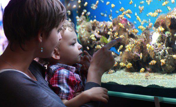 Los peces son una mascota muy demandada para los hogares
