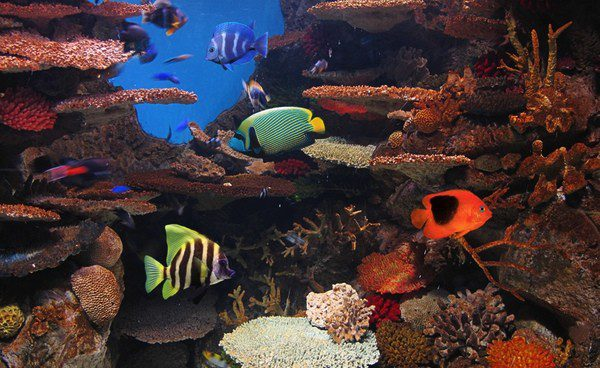 Los acuarios tienen que estar bien acondicionados para que los peces tengan calidad de vida