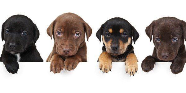 Los perros deben ser desparasitados para evitar que el problema se agrave