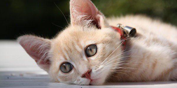 Protege la salud de tu gato